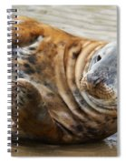 Portrait Of A Common Seal  Spiral Notebook