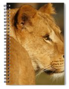 Portrait Of A Dreamy Lioness  Spiral Notebook