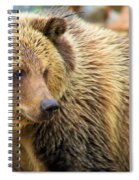 Portrait Of A Grizzly Spiral Notebook