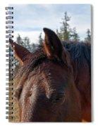 Portrait Of A Horse Spiral Notebook