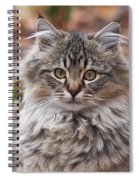 Portrait Of A Maine Coon Kitten Spiral Notebook