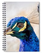 Portrait Of A Peacock Spiral Notebook