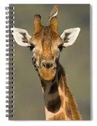 Portrait Of A Rothchilds Giraffe Spiral Notebook