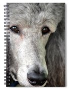Portrait Of A Silver Poodle Spiral Notebook