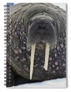 Portrait Of A Walrus Spiral Notebook