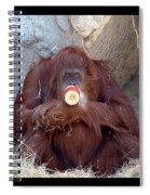 Portrait Of An Orangutan Spiral Notebook