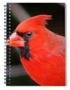 Portrait Of Male Cardinal Spiral Notebook
