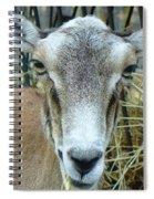 Portrait Of Mouflon Ewe Spiral Notebook
