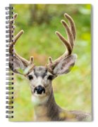 Portrait Of Mule Deer Buck With Velvet Antler  Spiral Notebook