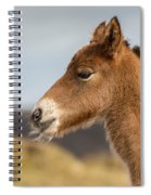 Portrait Of Newborn Foal Spiral Notebook