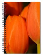 Portrait Of Red Tulips Spiral Notebook