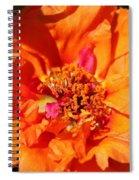 Portulaca Named Sundial Tangerine Spiral Notebook