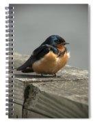 Posing Barn Swallow Spiral Notebook