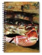 Posing Crab Spiral Notebook