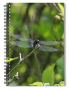 Posing Dragonfly Spiral Notebook