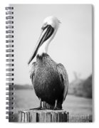 Posing Pelican - Black And White Spiral Notebook