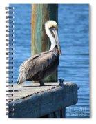 Posing Pelican Spiral Notebook