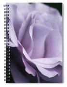 Posing Purple Rose Flower Spiral Notebook