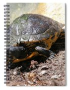 Possible Cooter Turtle Spiral Notebook