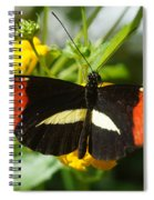 Postman Butterfly 2 Spiral Notebook