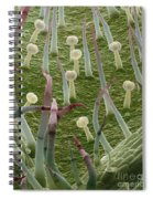 Potato Leaf Sem Spiral Notebook