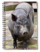 Potbelly Pig Standing Spiral Notebook