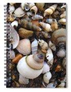 Potomac Shellscape Spiral Notebook