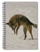 Pouncing Coyote Spiral Notebook