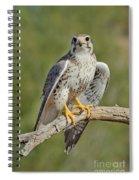 Praire Falcon On Dead Branch Spiral Notebook
