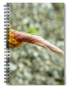 Prairie Smoke 5 Spiral Notebook