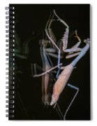Praying Mantis 2 Spiral Notebook