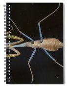 Praying Mantis 4 Spiral Notebook