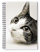 Precious Kitty Spiral Notebook