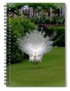 Pretty As A Peacock Spiral Notebook