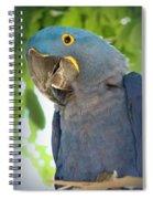 Pretty Bird Spiral Notebook