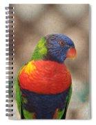 Pretty Bird - Rainbow Lorikeet Spiral Notebook