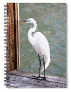 Pretty Great Egret Spiral Notebook
