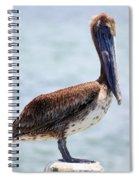 Pretty Gulf Pelican Spiral Notebook