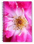 Pretty In Pink Rose Close Up Spiral Notebook