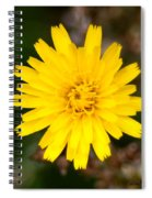 Pretty In Yellow Spiral Notebook