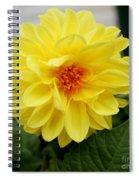 Pretty In Yellow Spiral Notebook