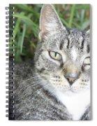 Pretty Kitty Spiral Notebook