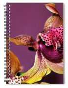 Pretty Orchid On Pink Spiral Notebook