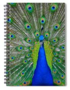 Pretty Peacock Spiral Notebook