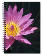 Pretty Pink And Yellow Water Lily Spiral Notebook