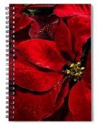 Pretty Poinsettias  Spiral Notebook