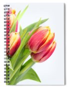 Pretty Red And Yellow Tulips On White Background Spiral Notebook