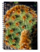 Prickly Cactus Leaf Green Brown Plant Fine Art Photography Print  Spiral Notebook