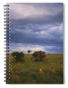 Pride Of Lions Spiral Notebook