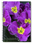 Primrose Purple Spiral Notebook